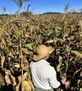 Aquecimento global aumentará quebras de produção