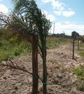 palmeira hosp 1